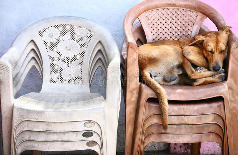 Heimatloser Hund, der auf den Stühlen schläft lizenzfreie stockfotos
