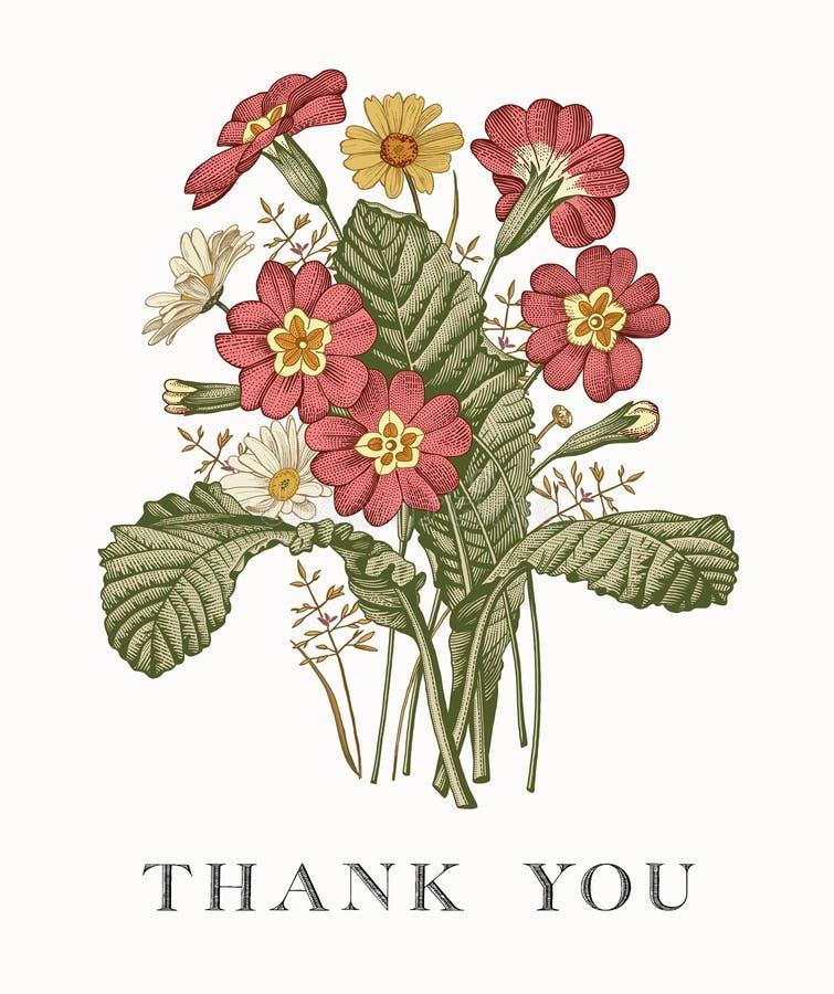 Heiratsdank und Einladung PrÃmula-Karte Feld-Vektorstich Victorian Illustration Blumen der Kamille schöne realistische lizenzfreie abbildung