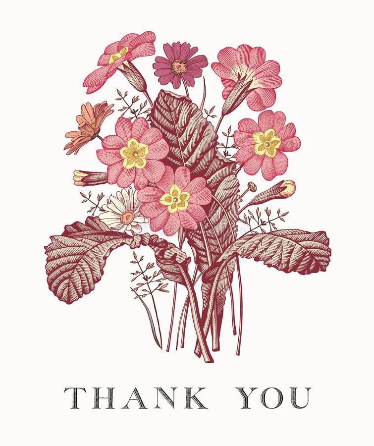 Heiratsdank und Einladung Primel-Karte Feld-Vektorstich Victorian Illustration Blumen der Kamille schöne realistische stock abbildung