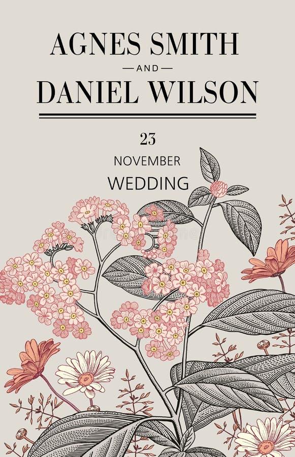 Heiratsdankeinladung Schöne realistische Blumen Kamillen-Heliotropkarte Feld, Aufkleber Vektor Victorian Illustration stock abbildung