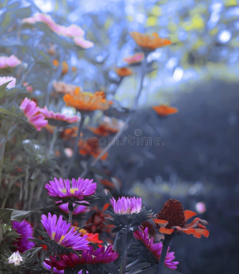 Heirloom Blooming Flowers. Blue toned image royalty free stock image
