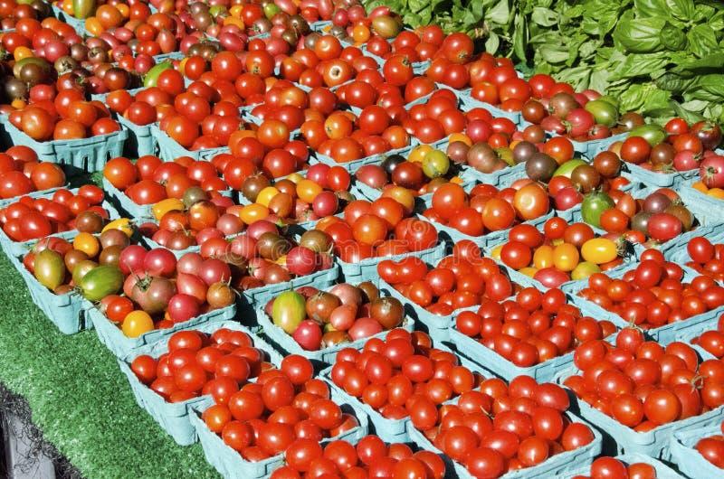 Heirloom Czereśniowi pomidory obraz royalty free