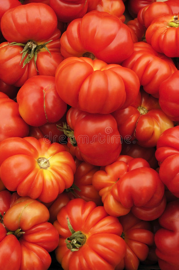 Download Heirloom Organic Tomatoes stock photo. Image of homegrown - 10456320