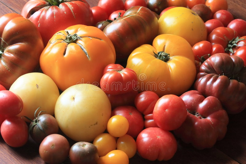 Heirloom tomatoes. Collection of organically grown heirloom tomatoes royalty free stock photography
