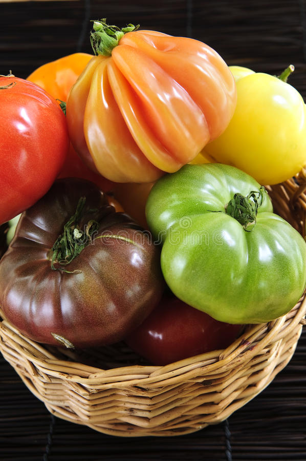 Heirloom tomatoes. Wicker basket full of multi colored heirloom tomatoes stock images