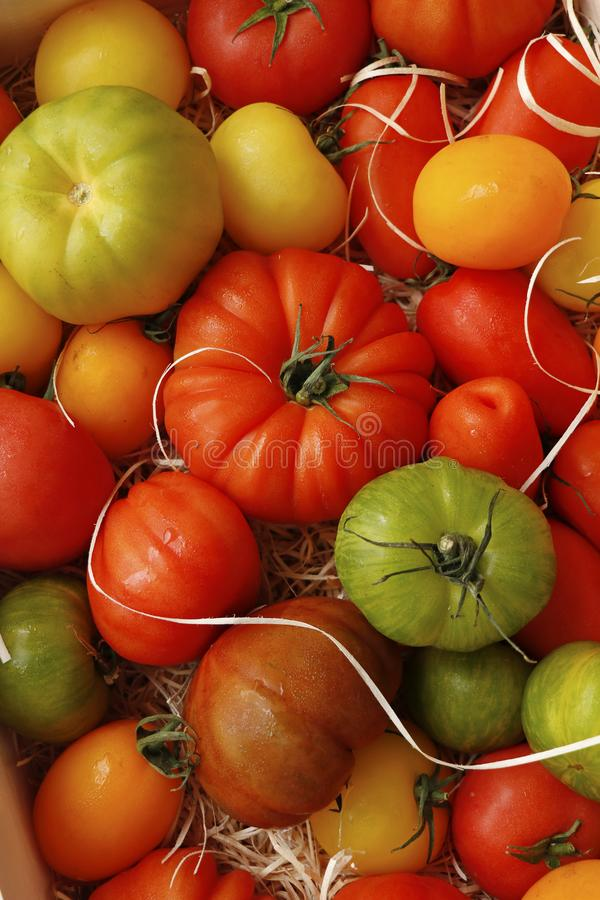 Heirloom tomatoes also known as heritage tomatoes royalty free stock image
