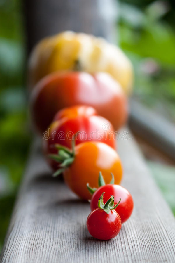 Heirloom Tomatoes. Assorted heirloom tomatoes on a wooden porch railing royalty free stock images