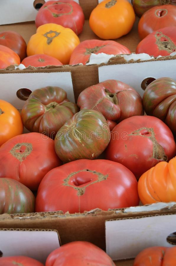 Heirloom Tomatoes. Boxes of various colored and shaped heirloom tomatoes for sale at the outdoor farm market stock photos