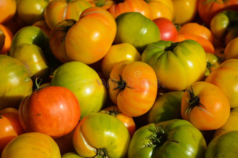 Heirloom Tomatoes Closeup royalty free stock photography