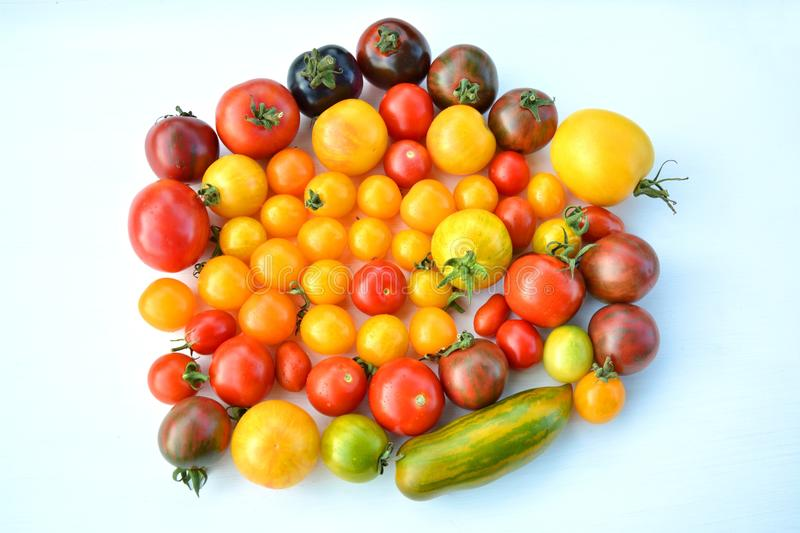 Heirloom tomatoes. Colorful fresh heirloom tomatoes collection royalty free stock photos