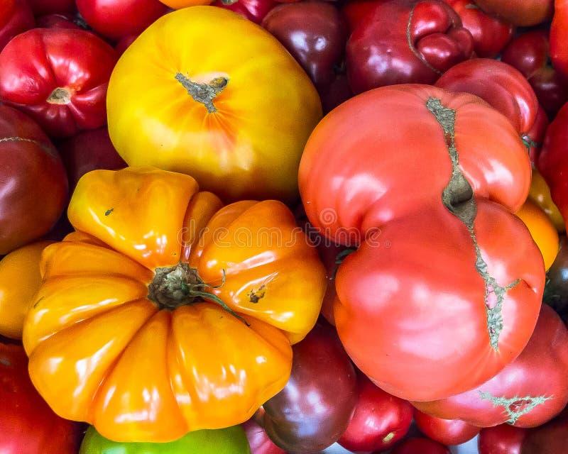 Heirloom tomatoes on display 3. Varieties of colorful heirloom tomatoes on display at exposition of heirloom fruits and vegetables stock images