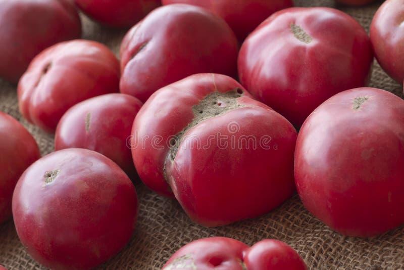 Heirloom Tomatoes. Heirloom or heritage mishapen historical tomatoes on hemp cloth stock photos