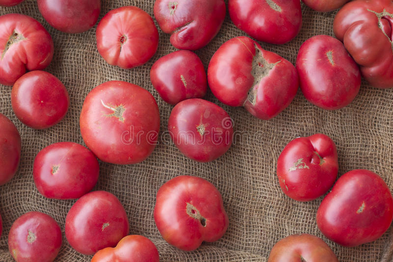 Heirloom Tomatoes. Heirloom or heritage mishapen historical tomatoes on hemp cloth royalty free stock images
