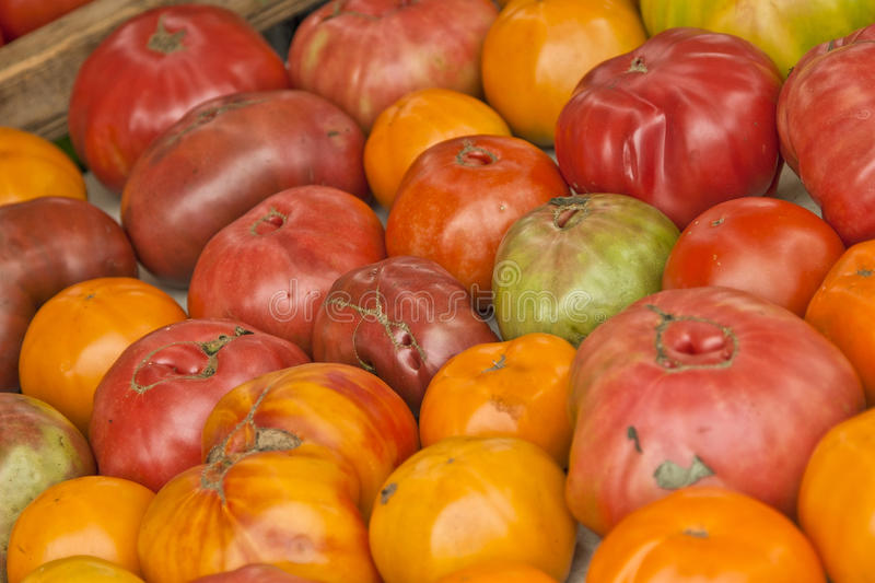 Heirloom Tomatoes at Market. Array of fresh-picked heirloom tomatoes at a farmers market in Virginia royalty free stock image
