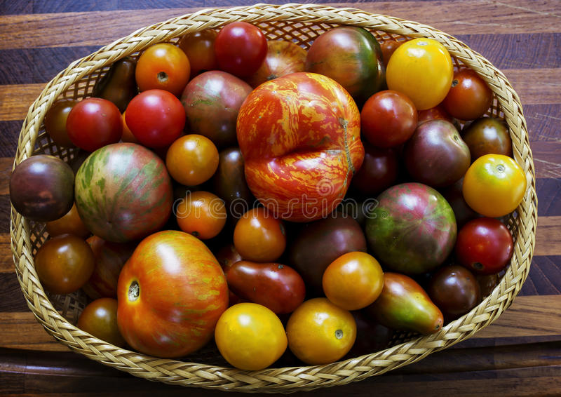 Heirloom Tomatoes. Several varieties of heirloom tomatoesin a basket royalty free stock photography