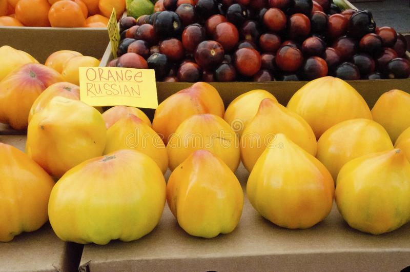 Heirloom Tomatoes. Yellow heirloom tomatoes with pointed ends called Russian Orange for sale at the outdoor farm market stock images