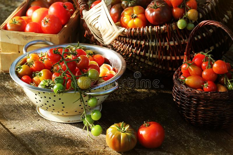Heirloom variety tomatoes in baskets on rustic table. Colorful tomato - red,yellow , orange. Harvest vegetable cooking. Conception. Full basket of tometoes royalty free stock image