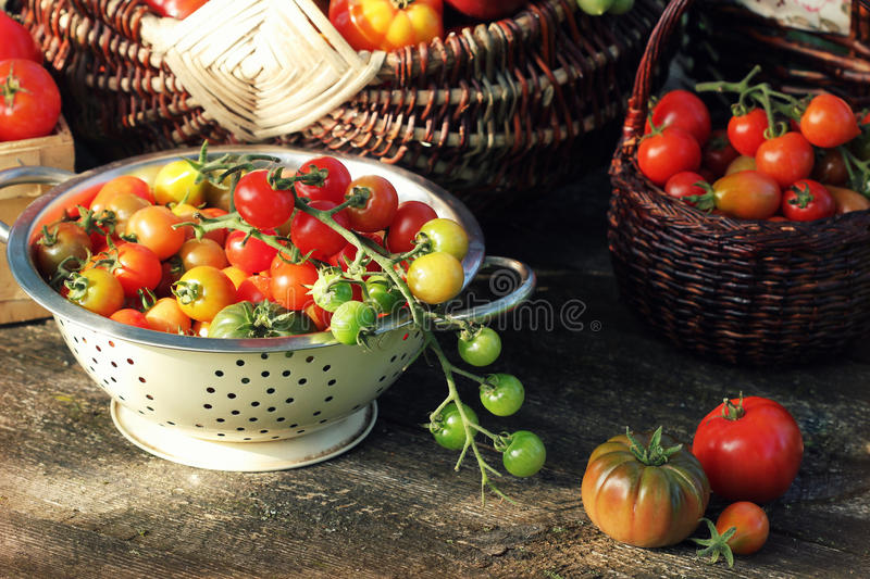 Heirloom variety tomatoes in baskets on rustic table. Colorful tomato - red,yellow , orange. Harvest vegetable cooking. Conception. Full baskets of tometoes in royalty free stock photos
