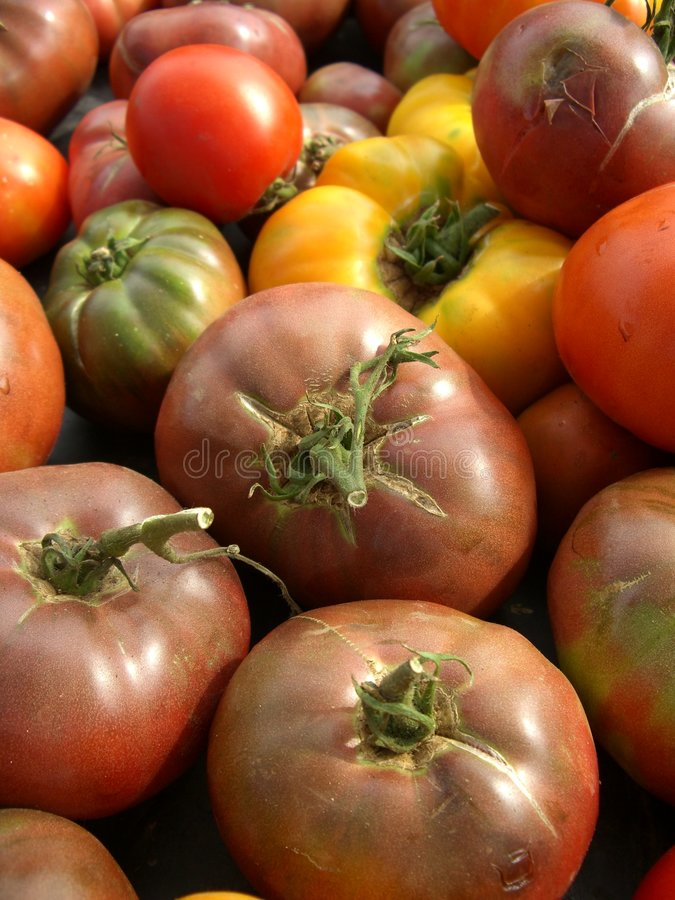 Download Heirlooms stock image. Image of tomatoes, green, produce - 978361