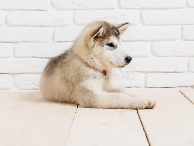 Fußboden Aus Ziegelsteinen ~ Heiserer hund auf holz mit ziegelsteinen stockbild bild von
