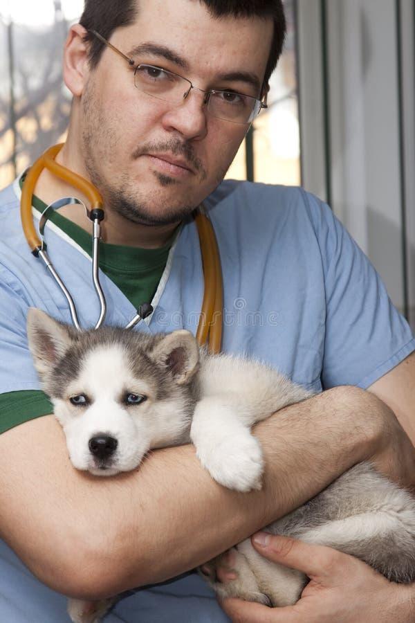 Heiserer Welpe am Tierarzt stockfotografie