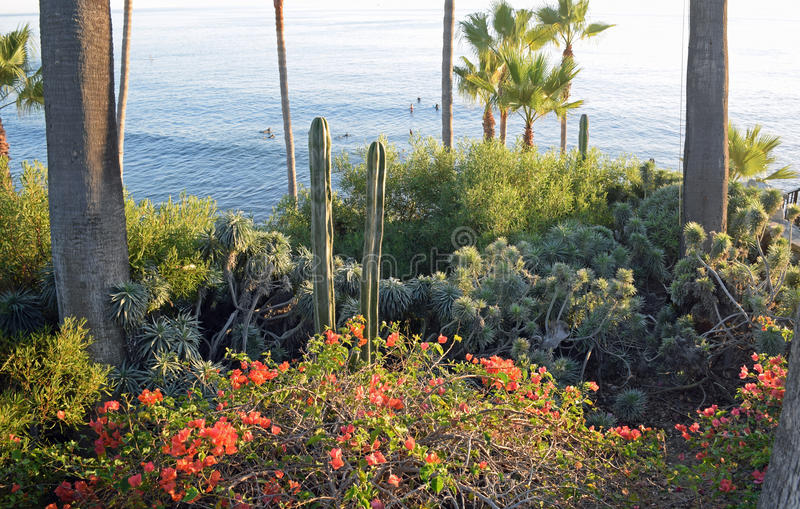Heislerpark gemodelleerde tuinen, Laguna Beach, Californië royalty-vrije stock foto's
