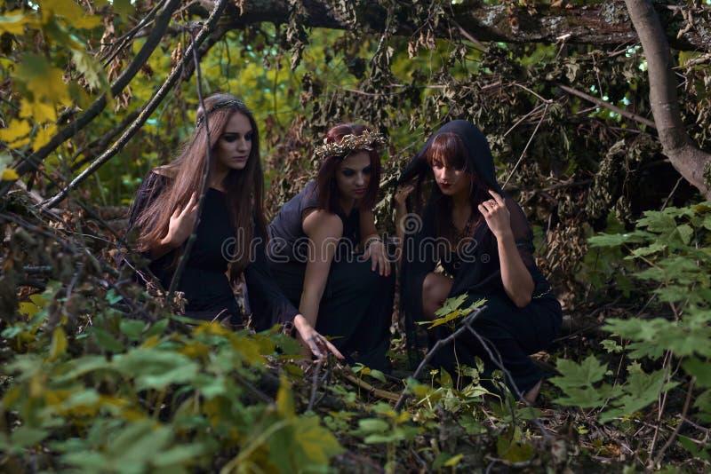 Heksen in donker bos stock foto