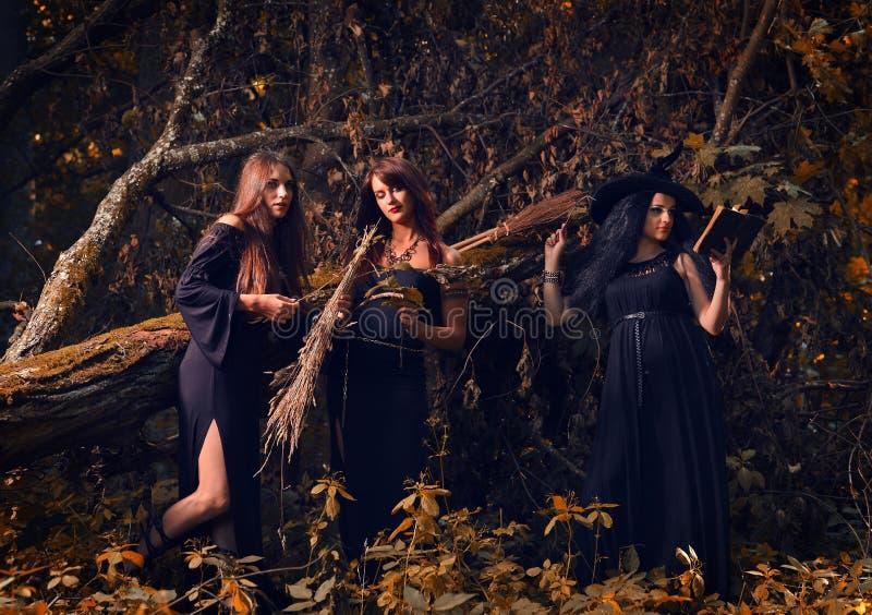 Heksen in een donker bos stock afbeelding