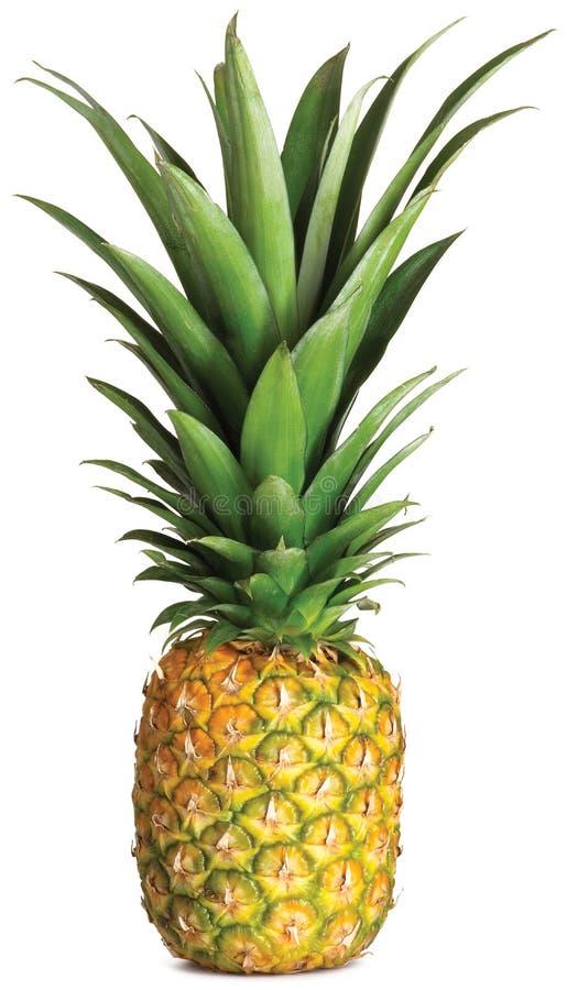 hel ananas royaltyfri foto
