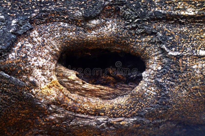 Hel bakgrund för träd fotografering för bildbyråer