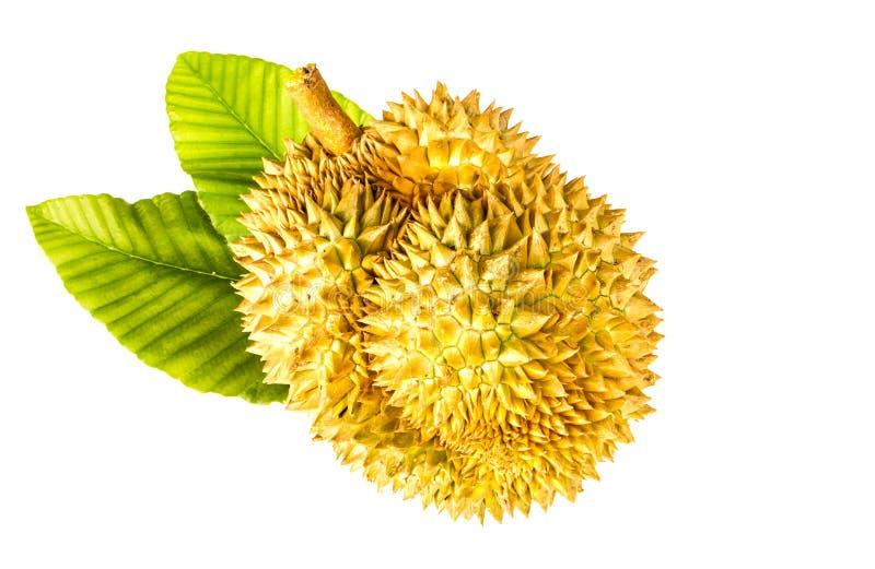Hel durian arkivfoto