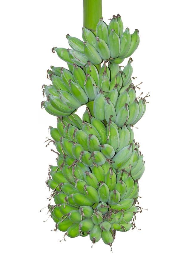 Hel grupp av gröna rå kultiverade bananer som isoleras på vit bakgrund arkivfoto