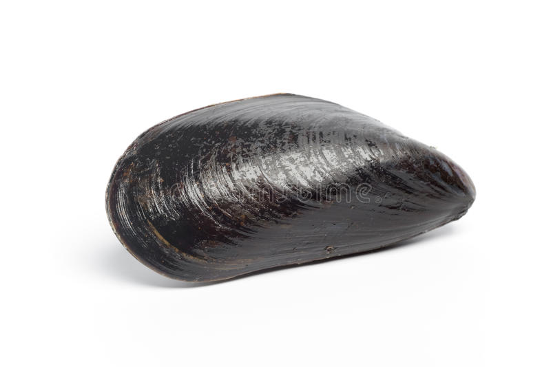hel ny mussla en royaltyfri bild