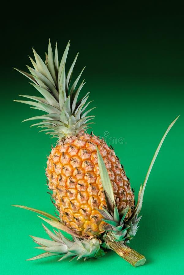 Hel organisk grön bakgrund för ananas med nya forsar på stammen royaltyfri bild