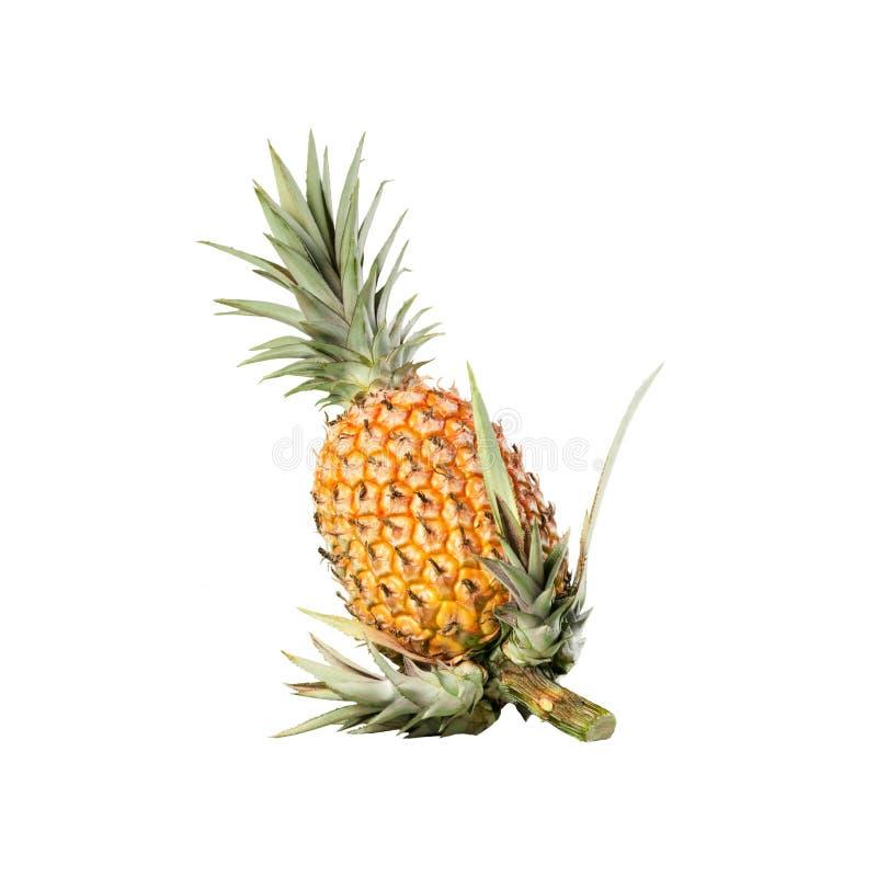Hel organisk vit bakgrund för ananas med nya forsar på stammen arkivbild