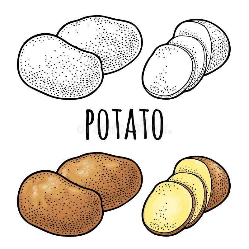 Hel potatis och skiva Gravyr f?r vektorf?rgtappning vektor illustrationer