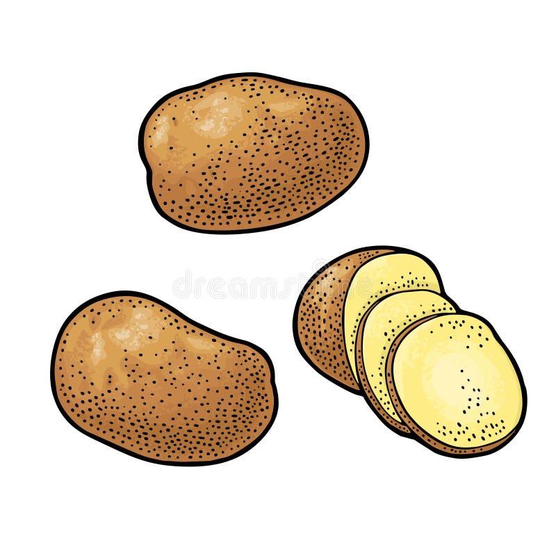 Hel potatis och skiva Vektorgravyrtappning royaltyfri illustrationer