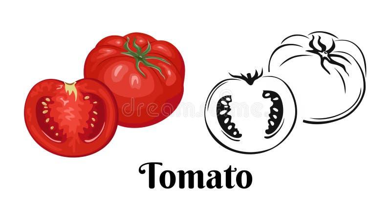 Hela tomater och halvor Färgillustration av den röda grönsaken och den svartvita symbolen vektor illustrationer