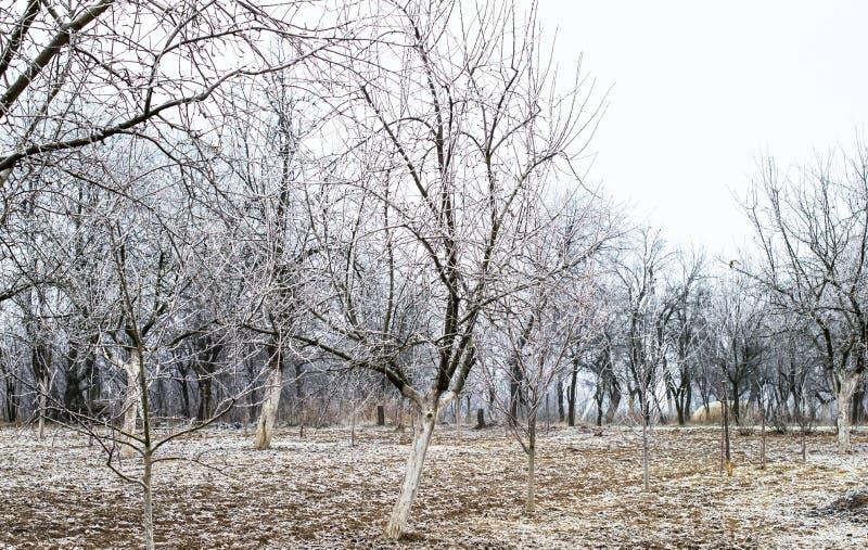 Download Helada blanca en árboles imagen de archivo. Imagen de aldea - 64200751