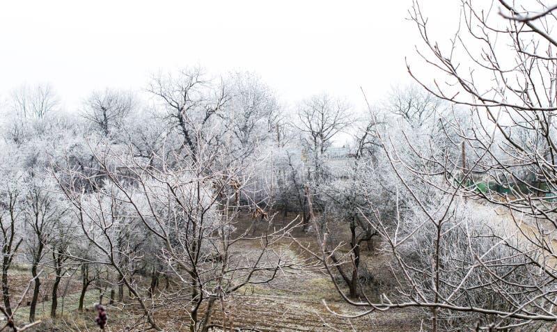 Download Helada Blanca En árboles En El Jardín Foto de archivo - Imagen de camino, frío: 64200738