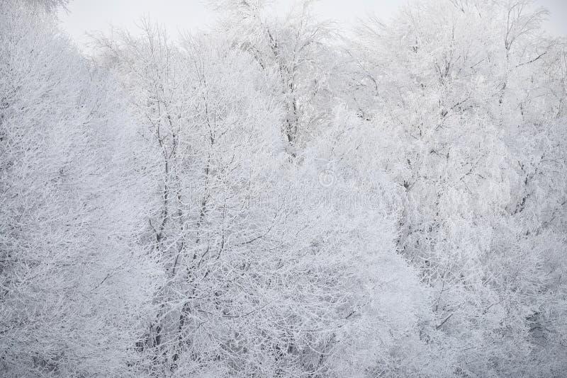 Helada mullida hermosa en las ramas de árboles en un día soleado escarchado Fenómeno natural hermoso del invierno Winte natural h foto de archivo libre de regalías