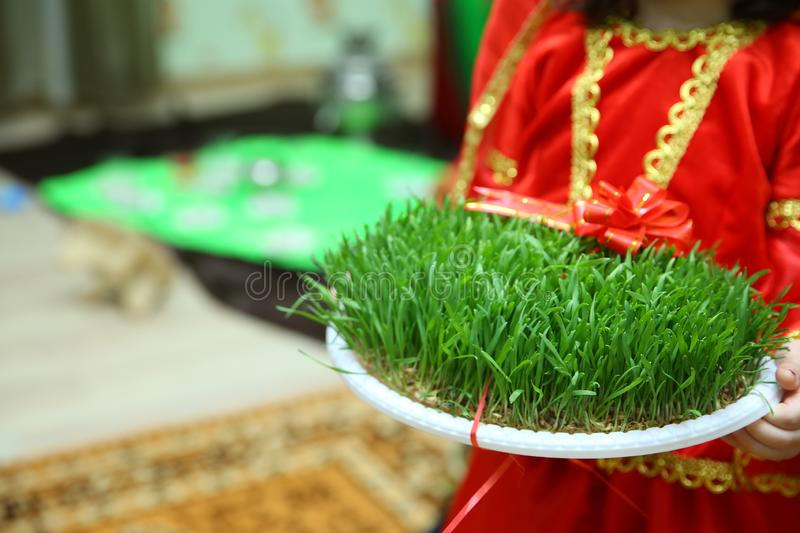 He held his hand in green Semeni . Navruz Nowruz holiday, the spring New Year holiday royalty free stock photo