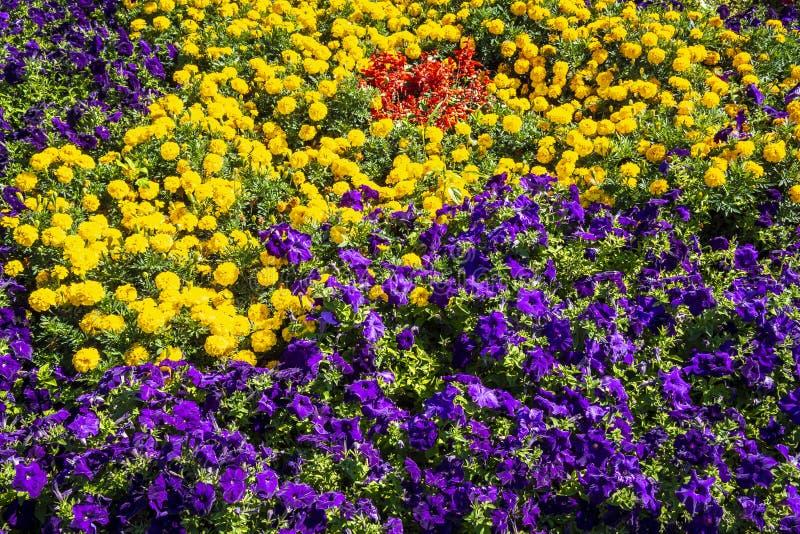 Helder bloembed stock foto