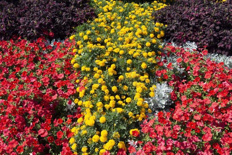 Helder bloembed stock foto's