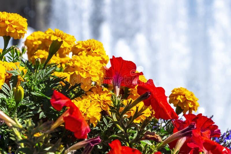 Helder bloembed stock afbeeldingen