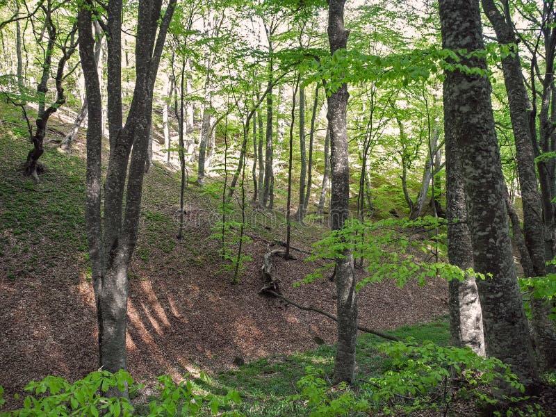 Helder de lentebos op berghelling Krim bergen stock afbeelding