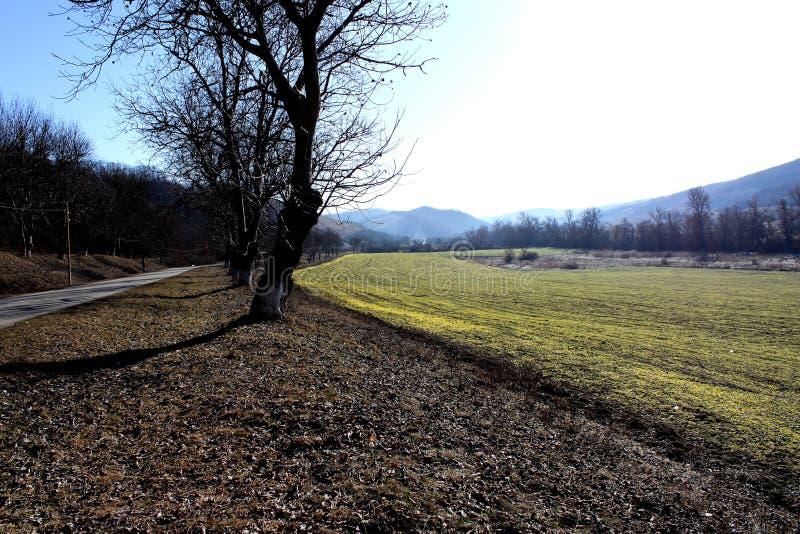 Helder de lentelandschap van een gebied en bomen stock foto's
