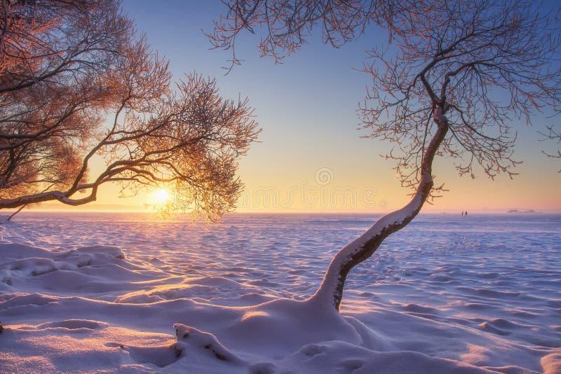 Helder de winterlandschap op gouden zonlicht Ijzige bomen op bevroren die meerkust door sneeuw wordt behandeld De tijd van Kerstm stock afbeeldingen