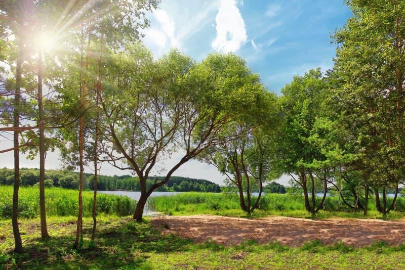 Helder de zomerlandschap van groene aard op meer op zonnige dag Heldere stralen van zon door groene bladeren van bomen stock foto's