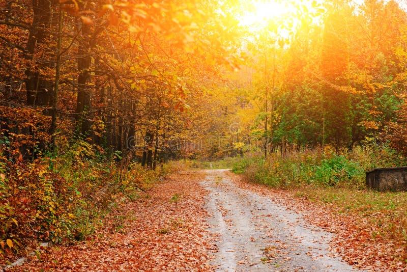 Helder en kleurrijk landschap van zonnig de herfstbos met sleep en steenblok aan de kant van manier stock foto's